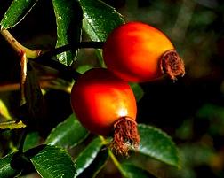 goji-original-owoce